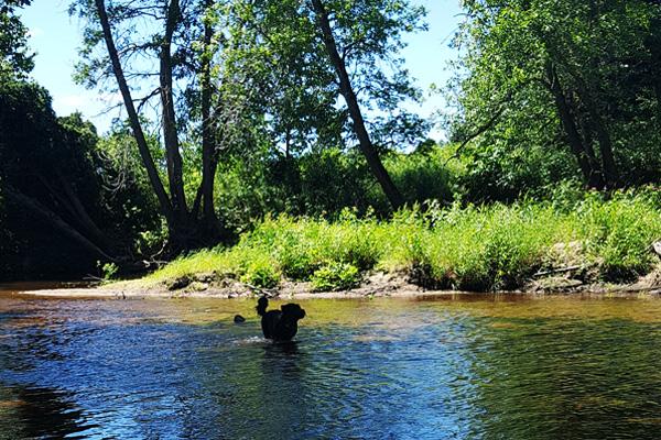 Designated Dog Swim Area